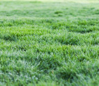 grass-grass-field-grassland-1001676