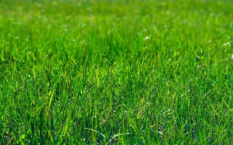 DML-Benefits-of-sod-lawn